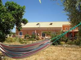 Zicht op het huis vanuit de sinaasappelboomngaard, waar je heerlijk in de hangmat kan luieren.