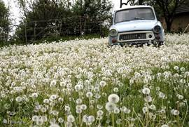 The trabant in spring