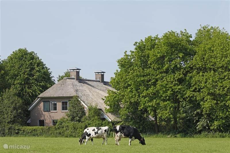 Vacation rental Netherlands, Drenthe, Eesergroen Manor / Castle Villa UitZicht