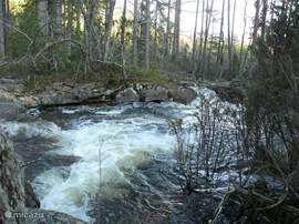 Riviertje in aangrenzend bos van 40.000 hectare.
