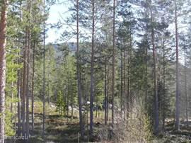 Aangrenzend bos met mooie wandelroutes. Vanuit het huis loop je direct het bos in.
