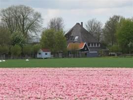 Het zijaanzicht van de boerderij, in de zomer van 2011 stonden de velden vol met tulpen. Een prachtig gezicht!