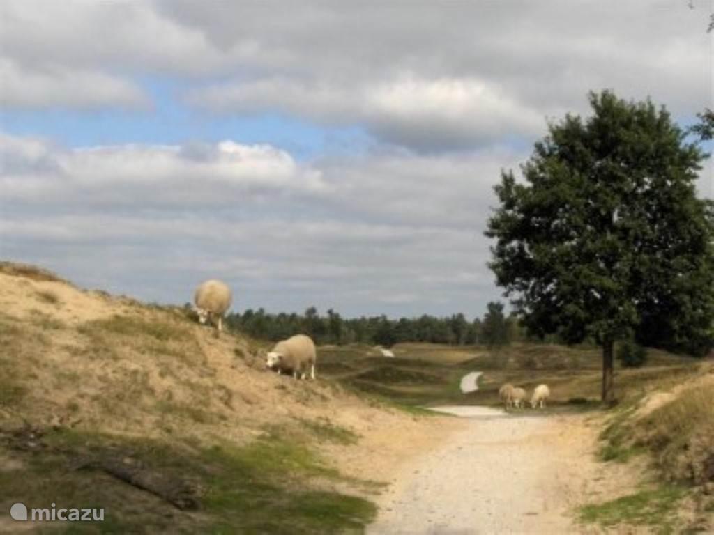 Heerlijk fietsen op de vele fietspaden;  op ontdekkingstocht in het Aeckingerzand, Dwingelderveld en Drents Friese Wold