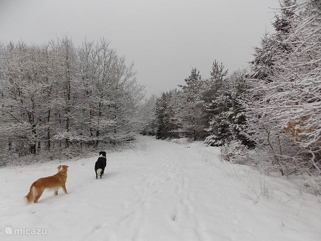 Neichen in de sneeuw