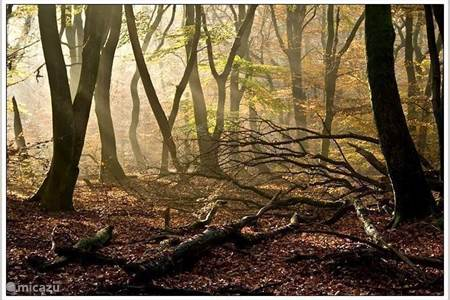 Het Speulder- en Sprieldersbos