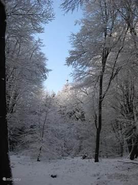bij sneeuw in het speulderbos is het heerlijk wandelen