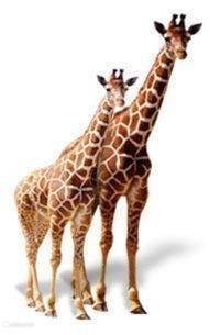 Welkom bij Zoo Dvur Králove  Als kinderen , we allemaal waarschijnlijk gedroomd op avontuur gaan in het wild . Die lang geleden familie uitstapjes naar dierentuinen zijn nu dierbare herinneringen. Nu kunt u ervaren de mysteries van Afrika in Dvur Králove Zoo zonder te reizen naar verre verre lande