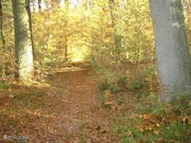 De bossen in de herfst