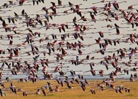 Het natuurgebied Paraje natural Punta-Entinas staat bekend om de vele flamingo's die er leven.