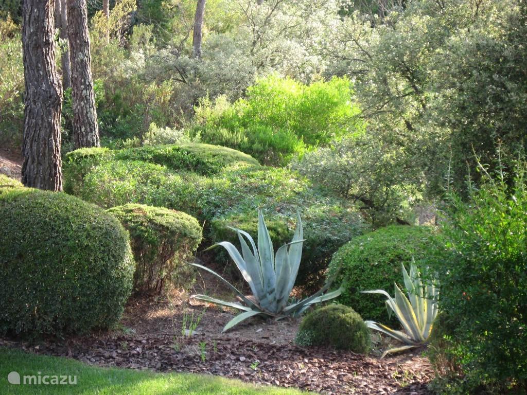 Ook het bos-gedeelte van de tuin wordt goed onderhouden.