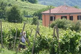 Villa midden in de wijngaarden