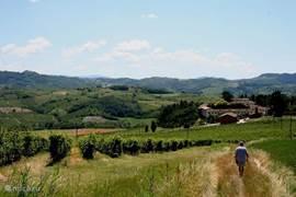Vrij wandelen in de wijngaarden direct vanaf uw vakantiehuis