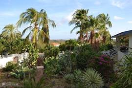 Tropische tuin met locale vegetatie.