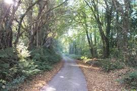 Als u via de zij ingang de weg op gaat, loopt u onder de bomen door richting Dromore quay. De rivier bevindt zich aan uw rechterhand.