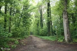 Het bos begint 30 meter van het vakantiehuis. Je kunt hier heerlijk uitgebreide wandelingen maken. De honden (officieel) mogen zonder riem in het bos lopen, mits onder appel en sociaal.