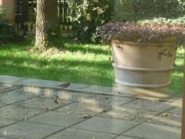 Een nieuwsgierige bezoeker. Verschillende soorten vogels en zelfs eekhoorns weten onze tuin de te vinden.