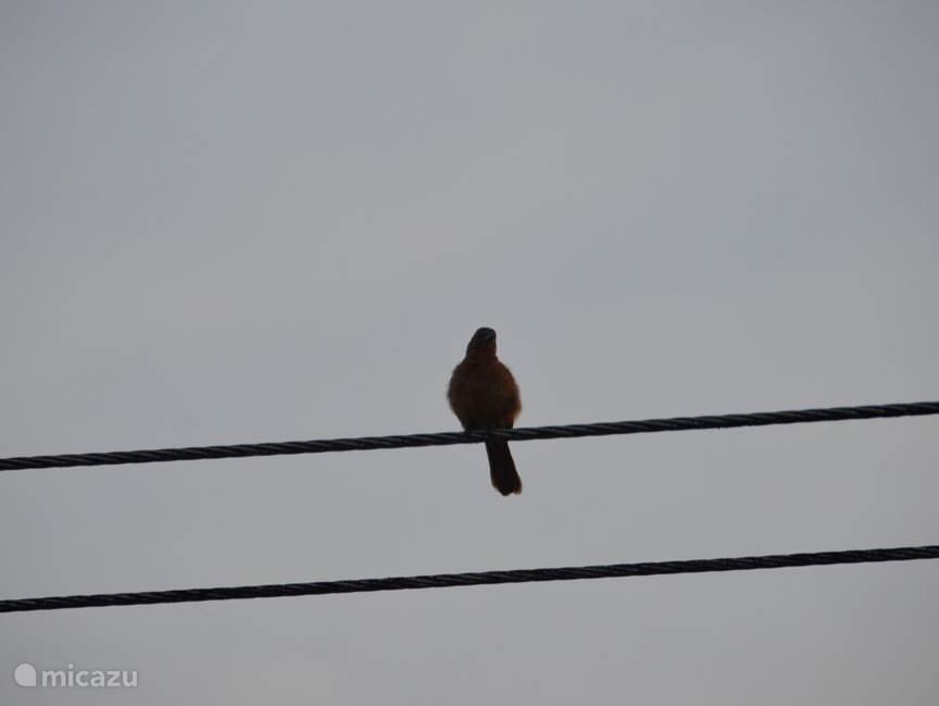 Exotische vogels vanaf het balkon spotten