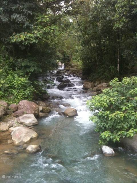 a creek not far from poema tropicale