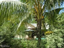 front of the house taken from the road with a coconut tree on the foreground