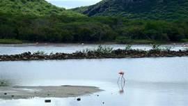 De zoutpannen van Jan Kok, met de bekende flamingo's vindt u letterlijk om de hoek.