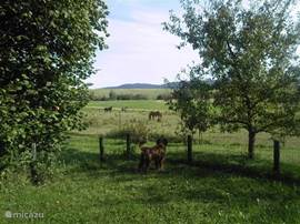 Over uw kinderen en huisdieren hoeft u zich ook  geen zorgen te maken als zij in de 1000 m2 grote boomgaard spelen, want deze is geheel omheind !