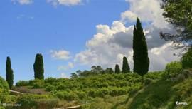 De Costa Blanca  heeft een prachtige natuur ,hier en daar zelfs Toscaans aandoende.
