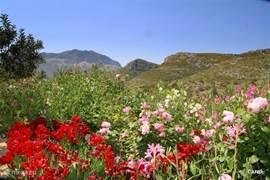 Een van de wonderen in de ruige bergen is toch wel de iristuin. Uiteraard aangelegd door plantminnende Engelsen. Je verwacht het totaal niet..wanneer je er naar toe rijdt in de maand mei.