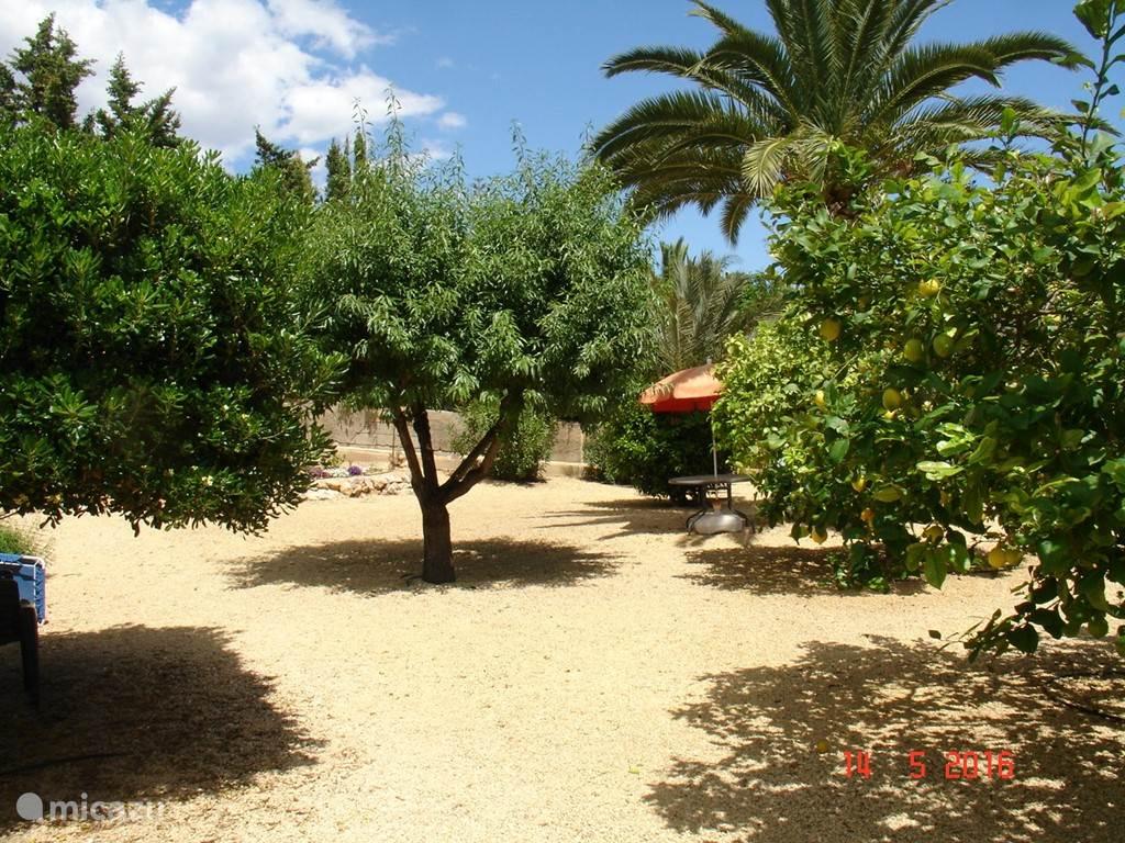grote tuin met fruitbomen