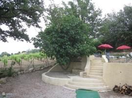 Deze foto toont een deel van het BBQ terras (oude terras, ligt nu een nieuwe terras) met de brede trap die naar het zwembad met terras gaat. Onder de vijgenboom is een bankje waar vandaan u uitzicht heeft over de baai van La Ciotat.