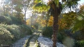 Een herfstplaatje: het tuinpad dat overgaat in ons bospad