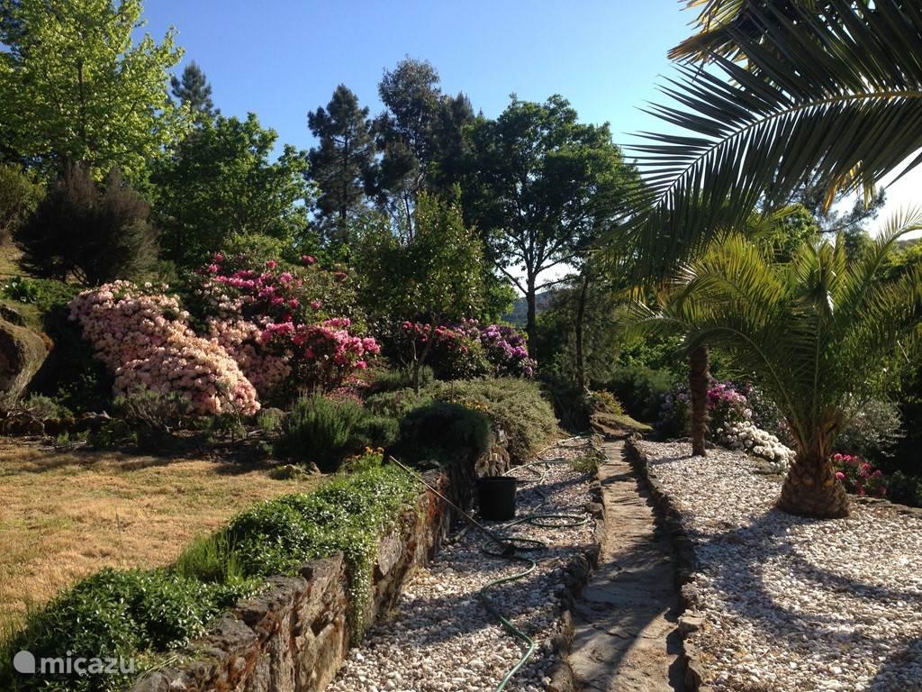 Hetzelfde pad in het voorjaar. Hier begint 1 van de vele mooie wandelingen die u vanaf ons terrein kunt maken.