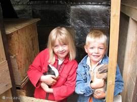 De kinderen zullen zich prima vermaken bij de konijnen, cavia's en kippen.