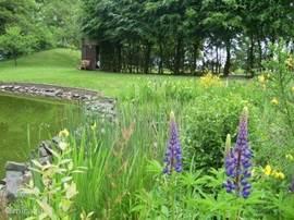 Schuin achter in de tuin van Heidehof vindt u onze grote vijver (700 m2)