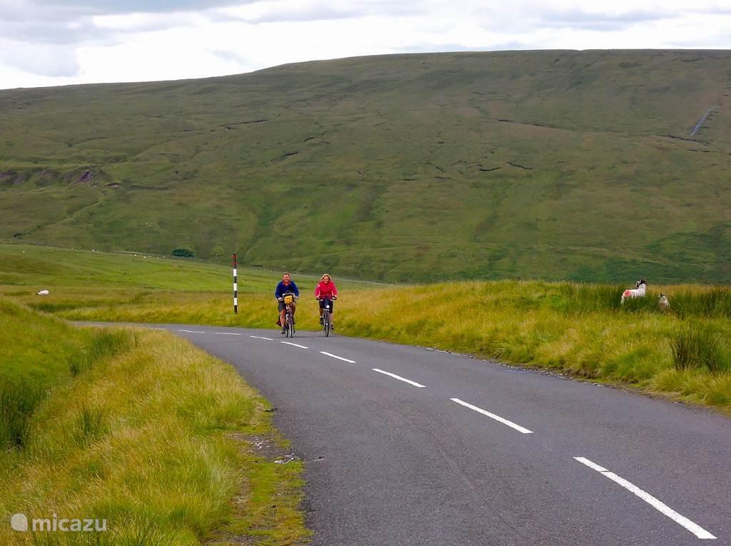 Een landschap met fietsers (Coast-2-Coast route) en schapen