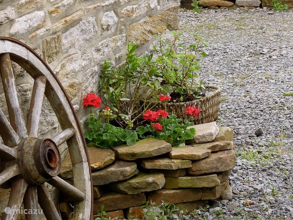 geraniums belong near a Barn
