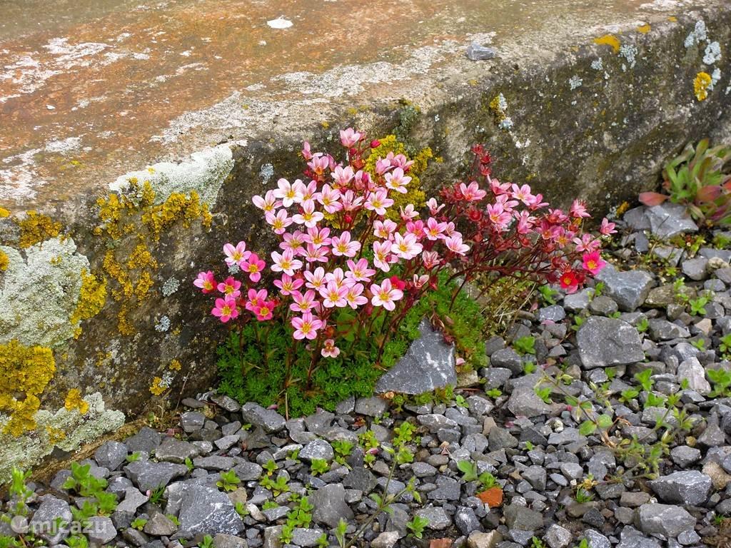 stenen met kleur accenten