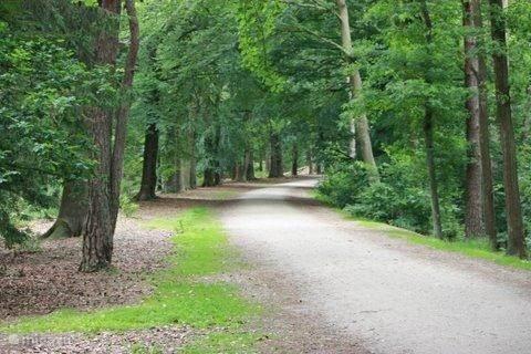 Bos-omgeving