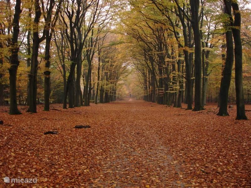 het bos in de herfst - op 500 meter afstand