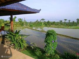 From veranda and terrace villa sea view and view to the own rice fields (here in the season when the rice plants just planted).
