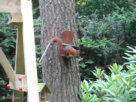 Een eekhoorntje naast de schommel