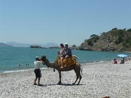 Op onzestrand mogen mensen paarden of kameel rijden