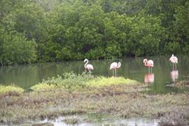 Flamingo's zijn er op het hele eiland, deze gefotografeerd op de weg naar Lac Cai waar de schelpenbergen zijn