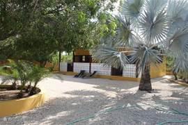 Uitzicht vanaf de porche van de eigenaren naar de studios toe met daar tussenin onze trots de Bismarck palm..