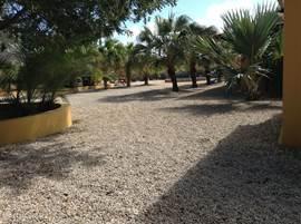 Uitzicht over de tuin. Zeer ruime tuin met palmen en planten..