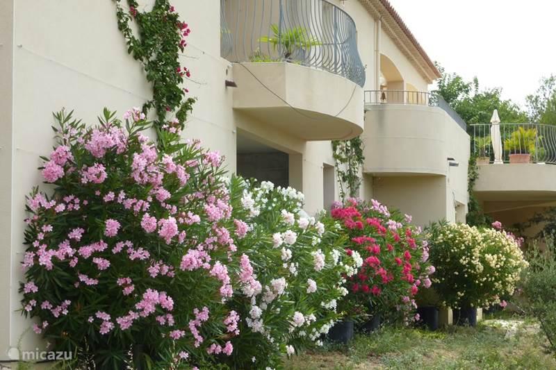 Vakantiehuis Frankrijk, Côte d´Azur, Bandol Villa Riante, zeer ruime villa Lou Paradou