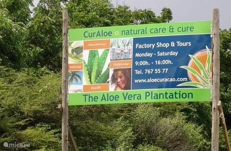 Aloe Vera Plantation Curacao
