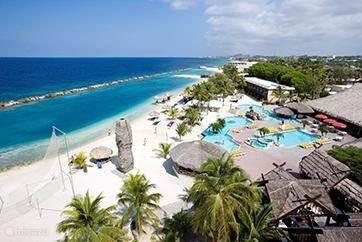 Mambo beach;