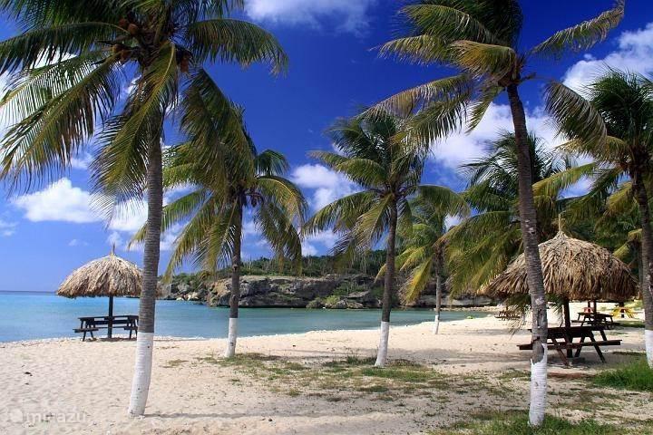 Boca Santa Cruz – Captain Goodlife