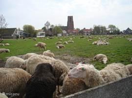 uitzicht op het historische dorp Ransdorp.