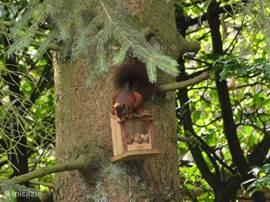 De eekhoorntjes zijn uw medebewoners op ons park.